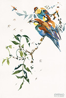 Bee-eater Trio in Ash tree
